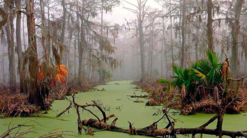 болота манчак
