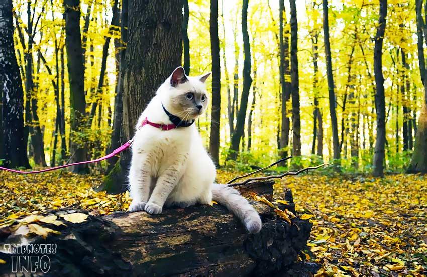 кошка в лесу