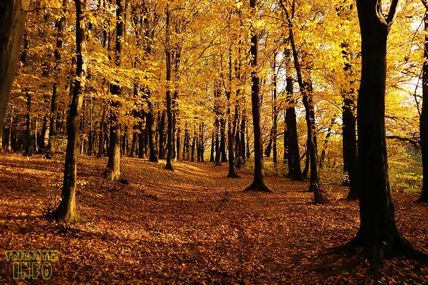 сыховский лес