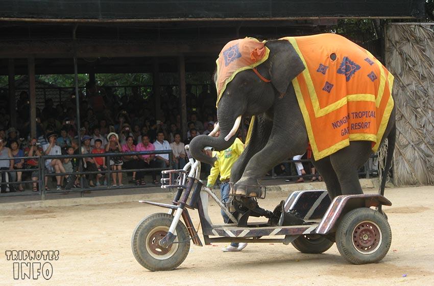 слон на мотороллере