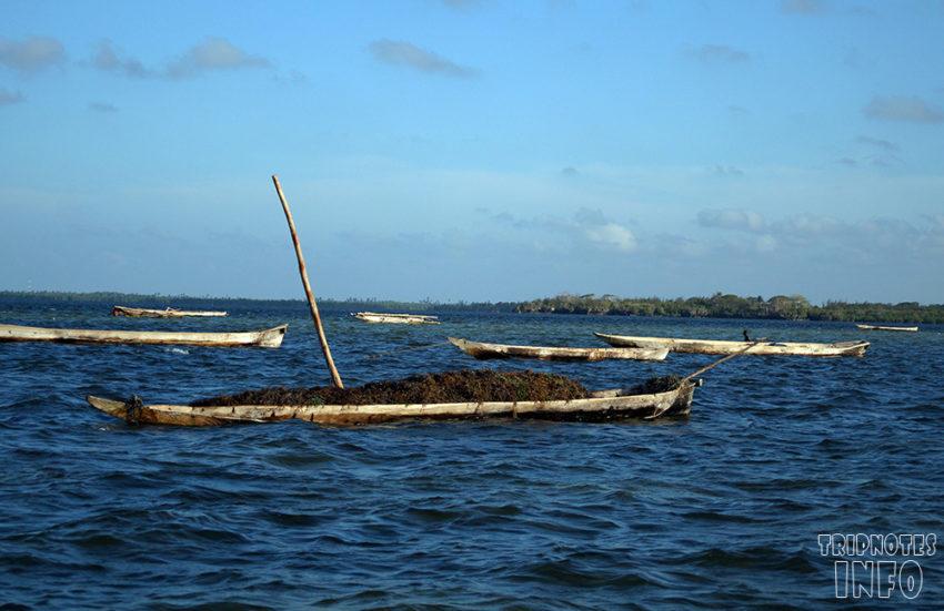 Пляжи Занзибара: самый полный путеводитель (фото) (карта) (отзывы)